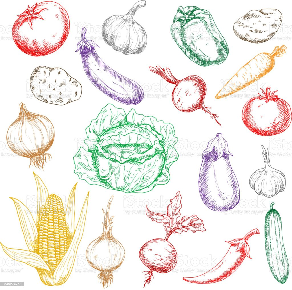 Sketched wholesome fresh vegetables icons vector art illustration