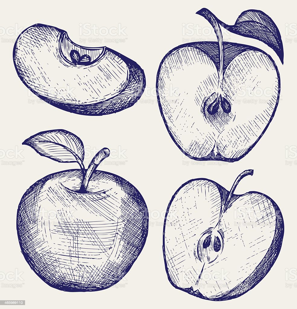 Sketches of a fresh apple whole and sliced with a leaf vector art illustration