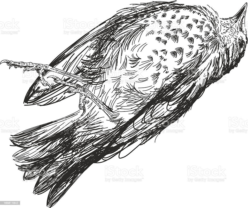 Sketchy Dead Sparrow vector art illustration