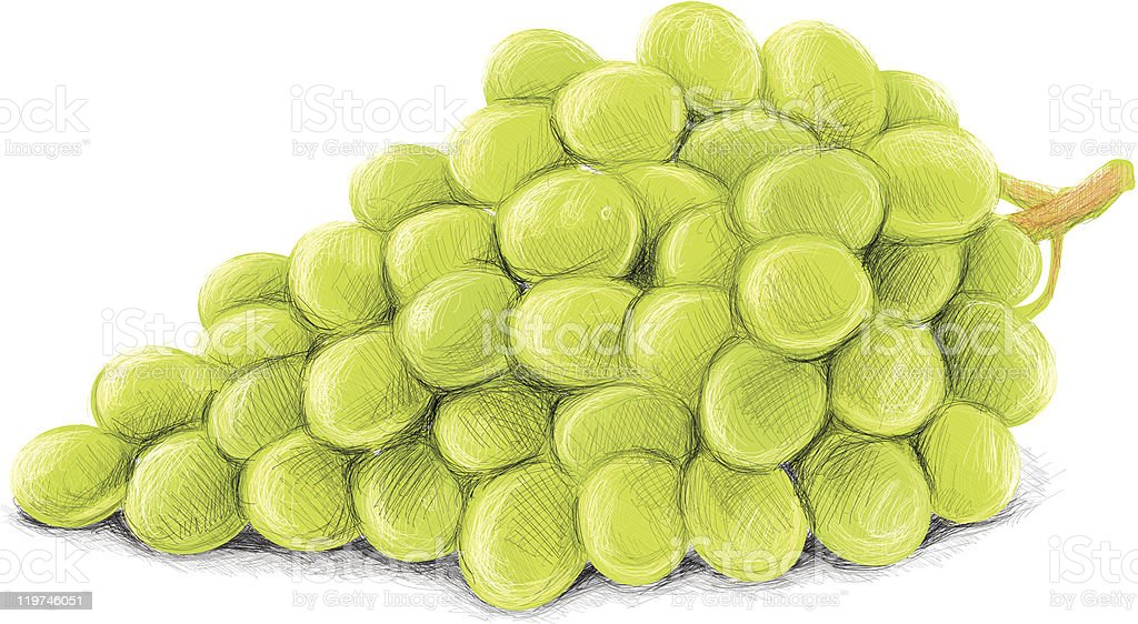 sketchy grapes vector art illustration