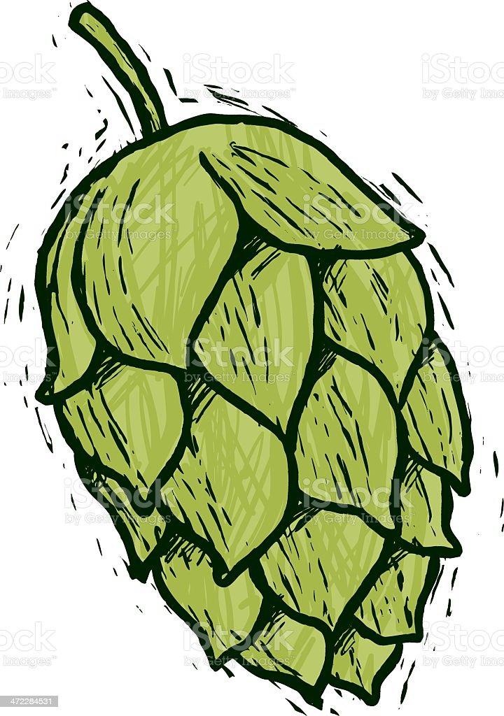 sketchy hops vector art illustration
