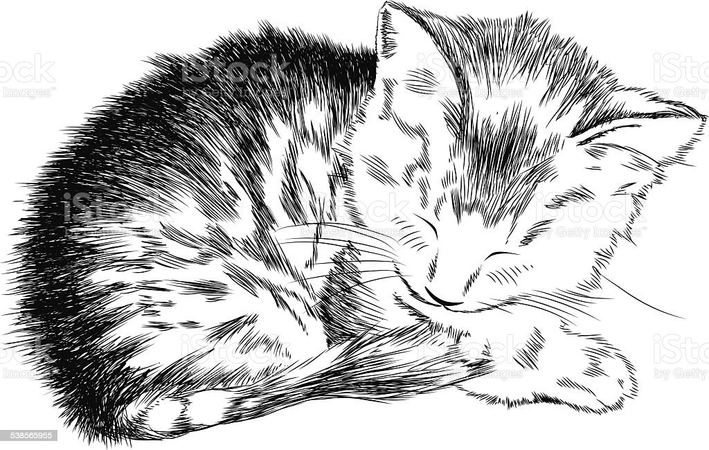 Sketchy kitty vector art illustration
