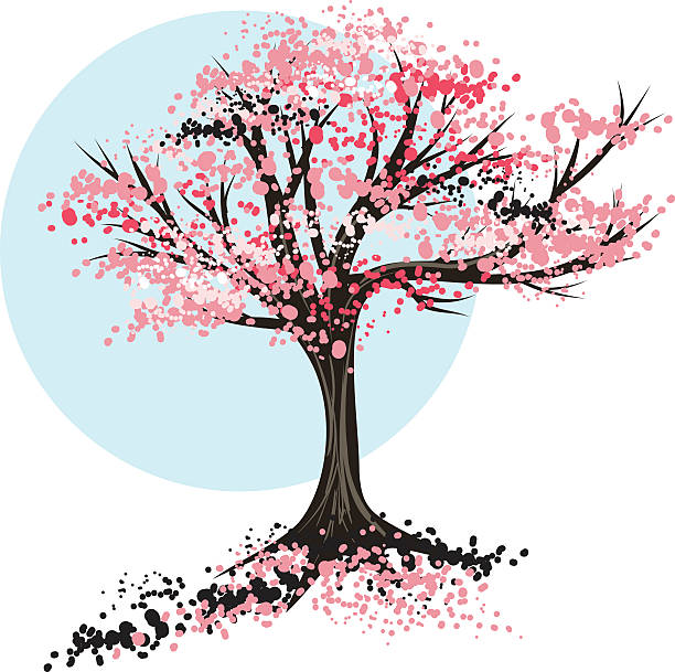 Cherry Blossom Tree Clip Art, Vector Images & Illustrations - iStock
