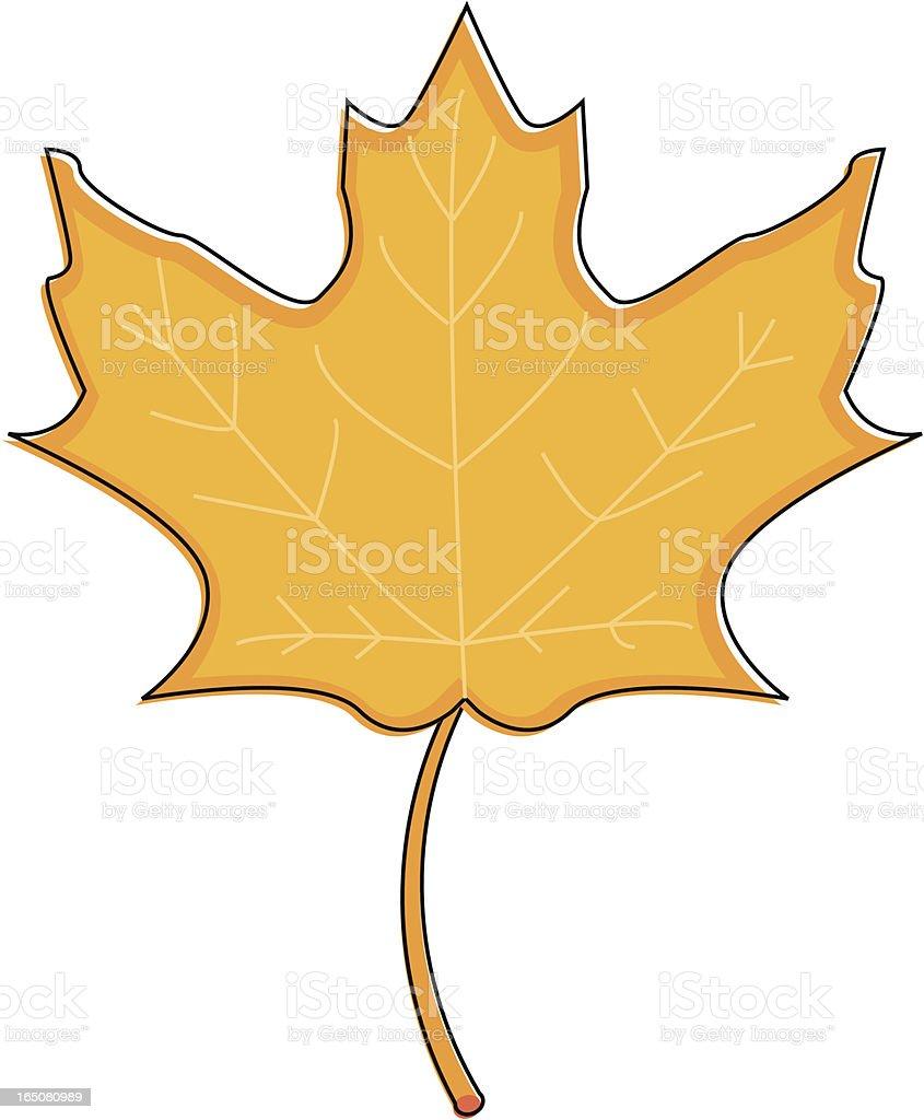 Sketchy Maple Leaf vector art illustration