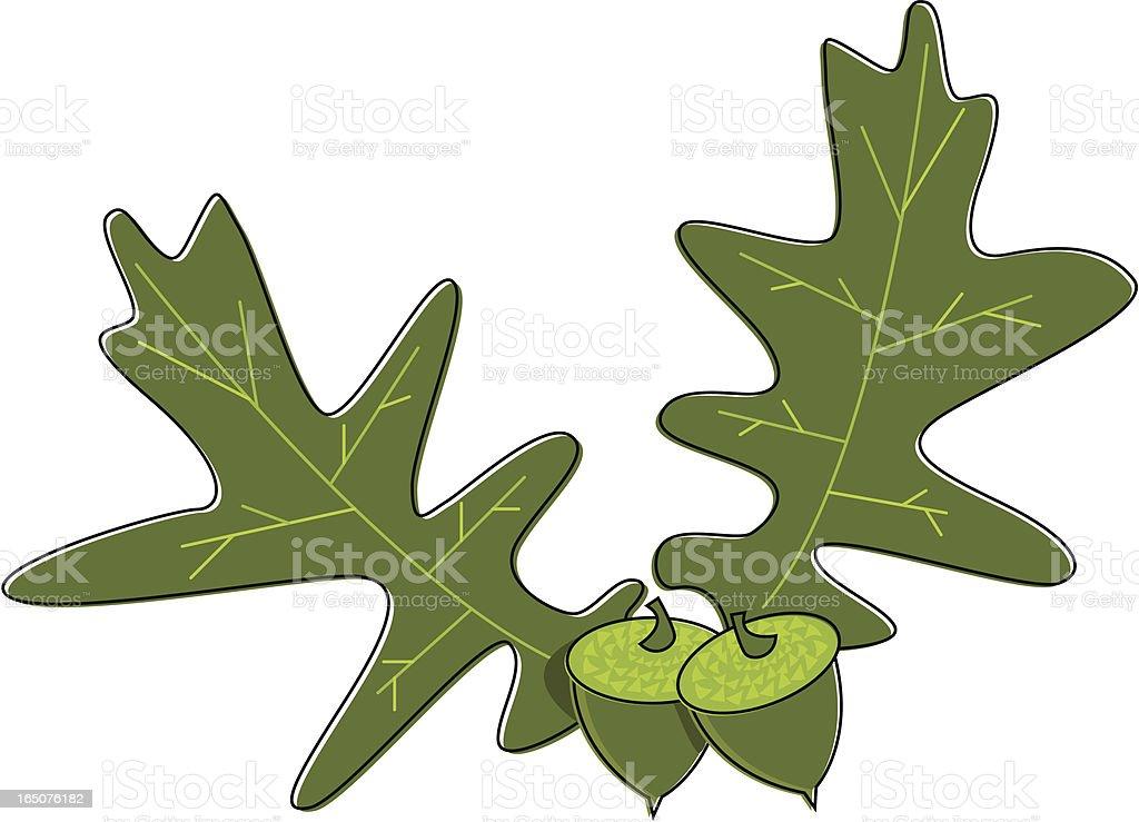 Sketchy Oak Leaves and Acorns vector art illustration