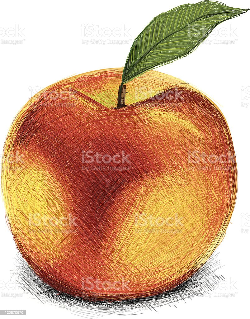 Sketchy Peach royalty-free stock vector art