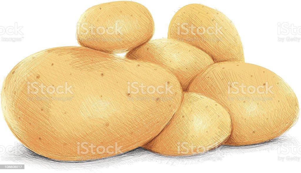 sketchy potatoes royalty-free stock vector art