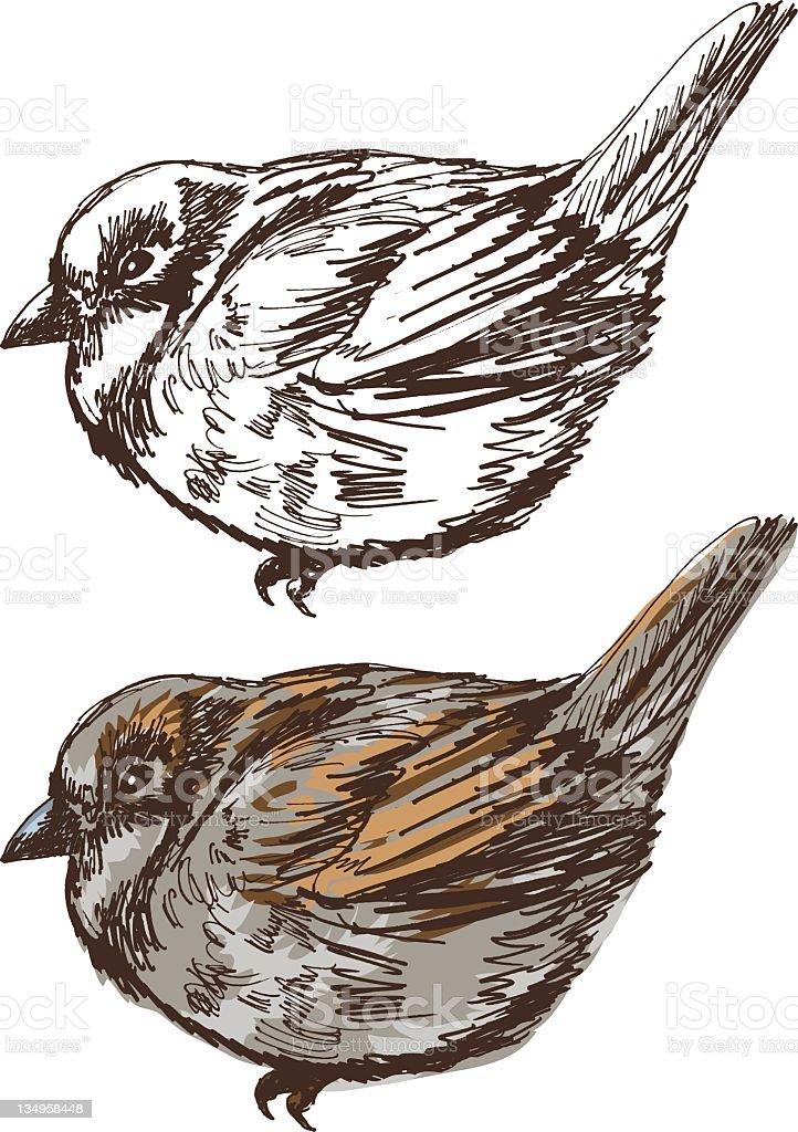 Sketchy Sparrow royalty-free stock vector art
