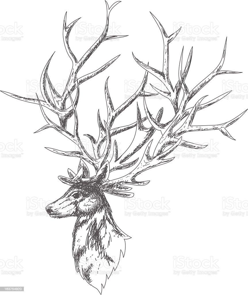 Sketchy Style Deer royalty-free stock vector art