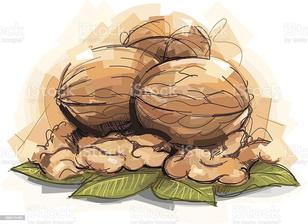 Sketchy walnuts vector art illustration