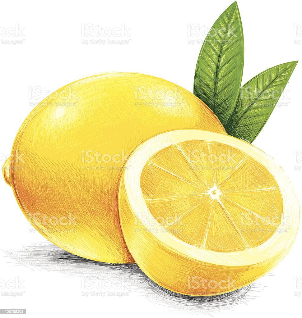 sketchy yellow lemon vector art illustration