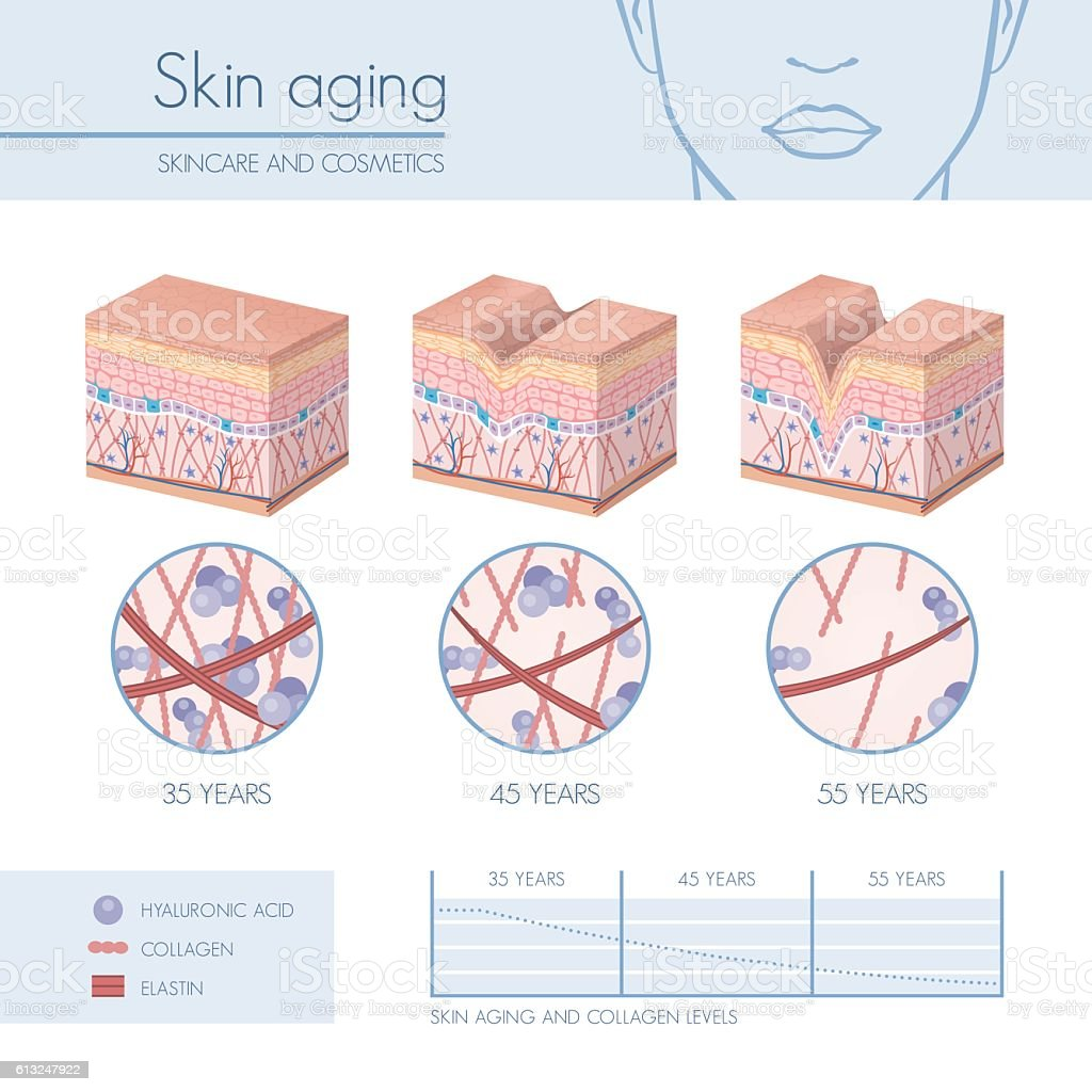 Skin aging vector art illustration