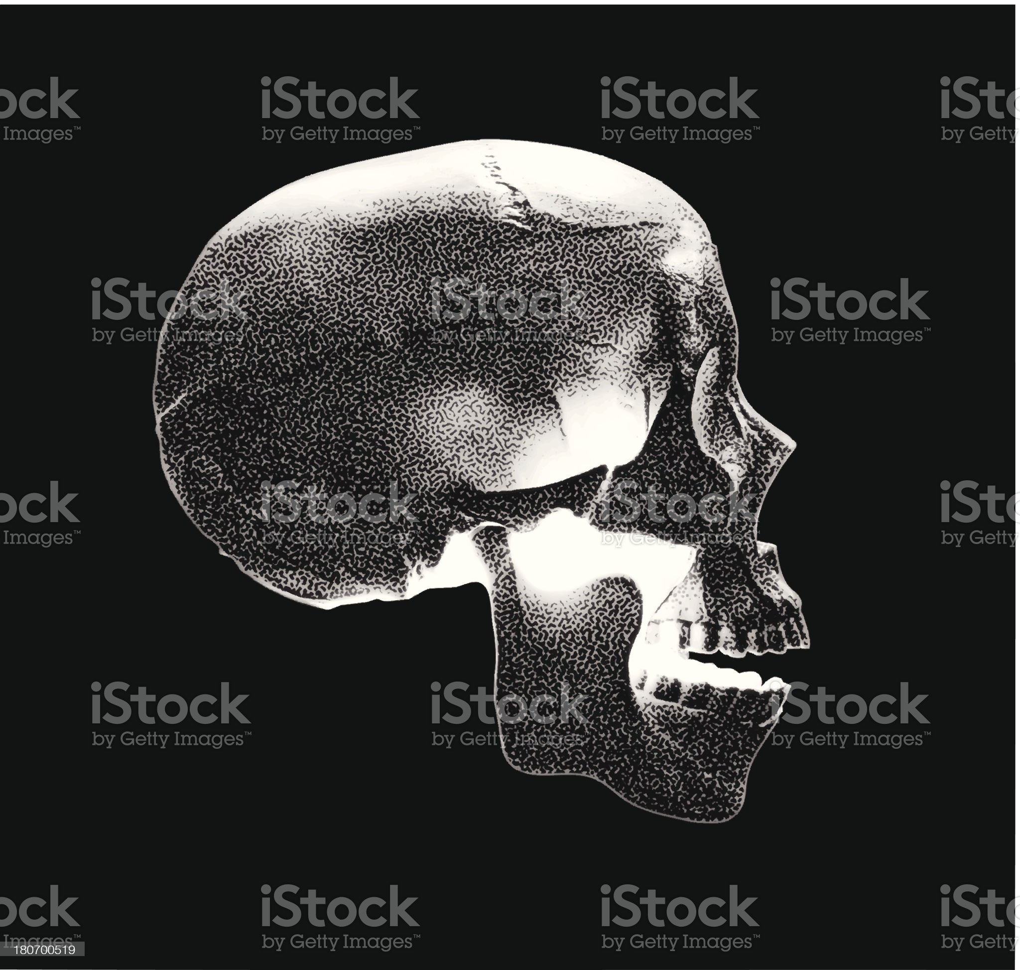 Skull Side View royalty-free stock vector art
