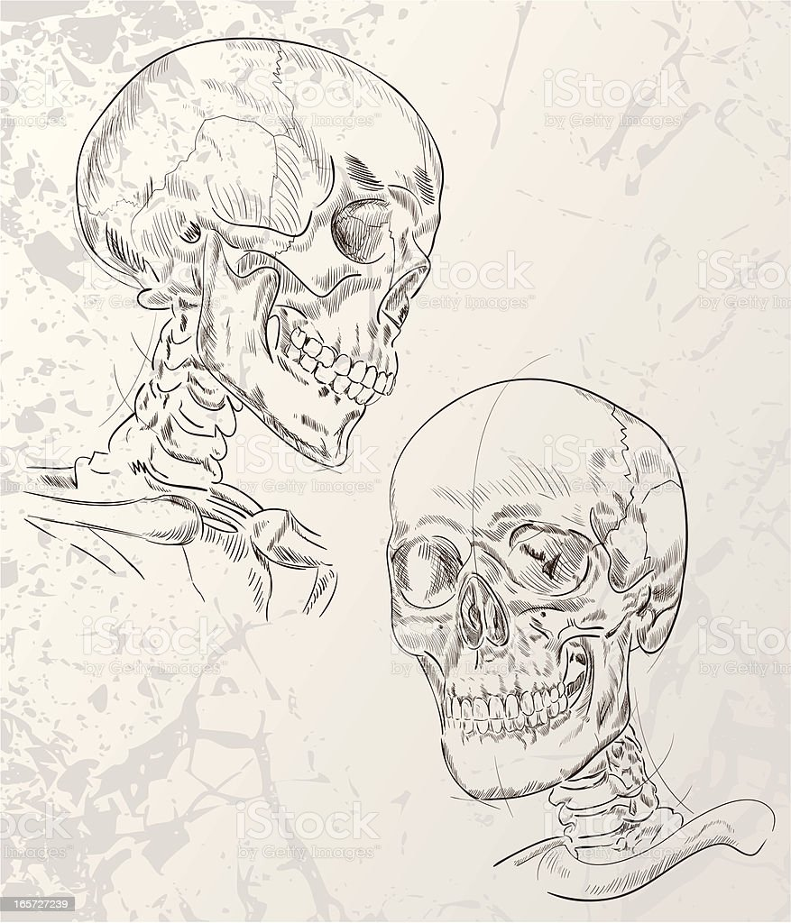 Skull Sketches with grunge vector art illustration