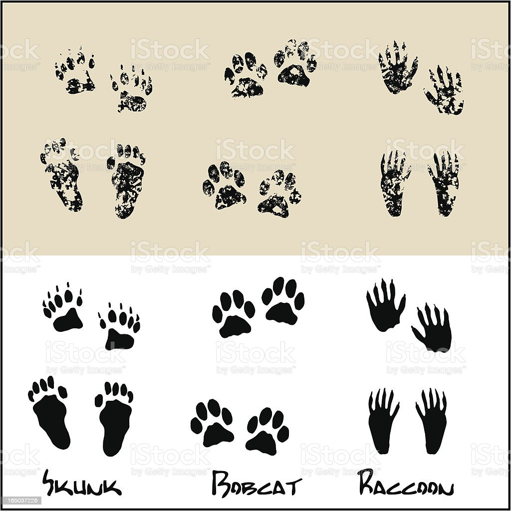 Skunk - Bobcat - Raccoon royalty-free stock vector art