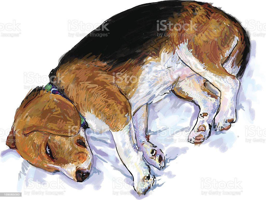 Sleeping Beagle royalty-free stock vector art