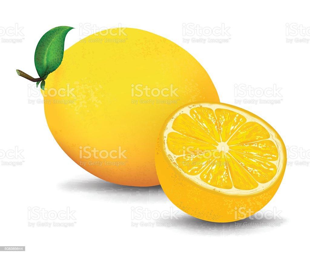 Slice of fresh lemon isolated on white background. vector Illustration vector art illustration