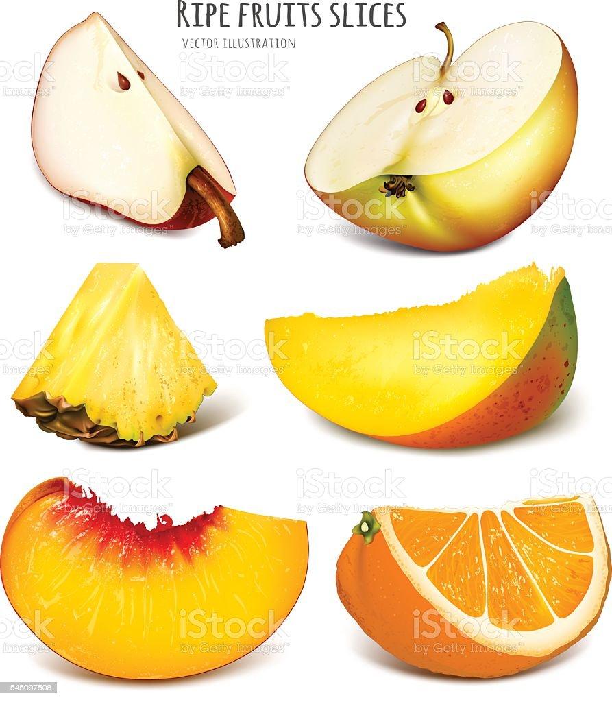 Slices of fresh fruits. vector art illustration