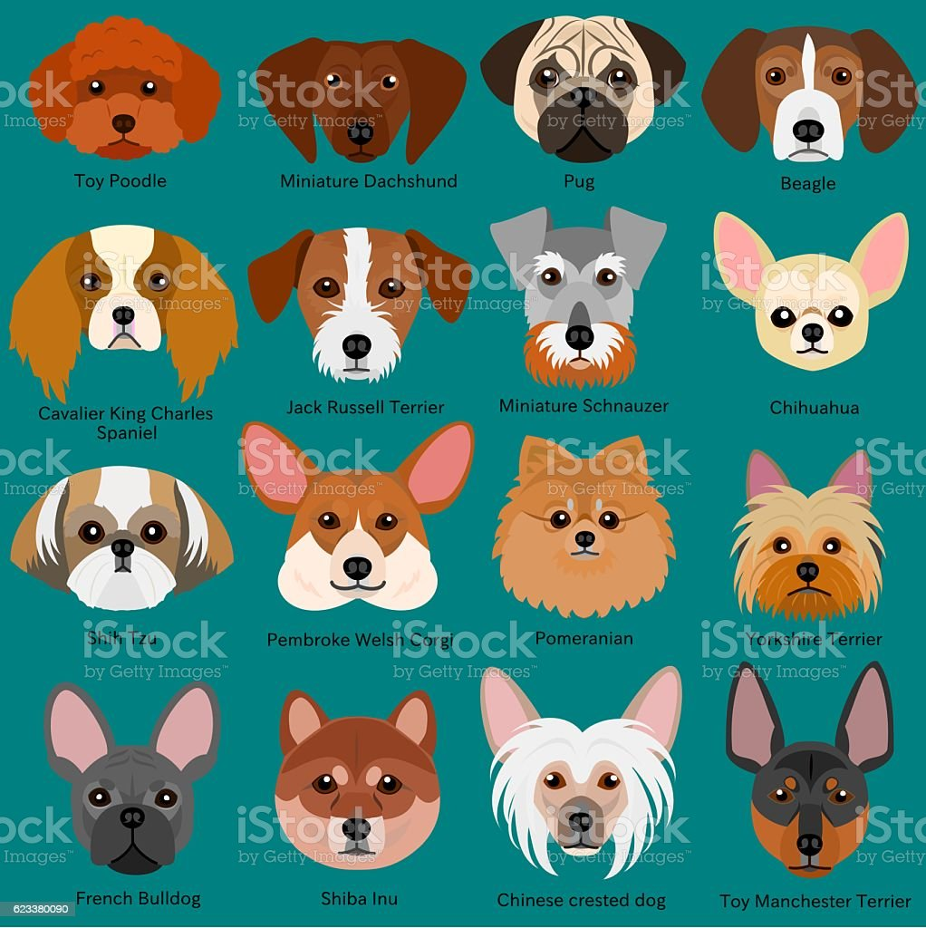 small dog faces set with breeds name vector art illustration