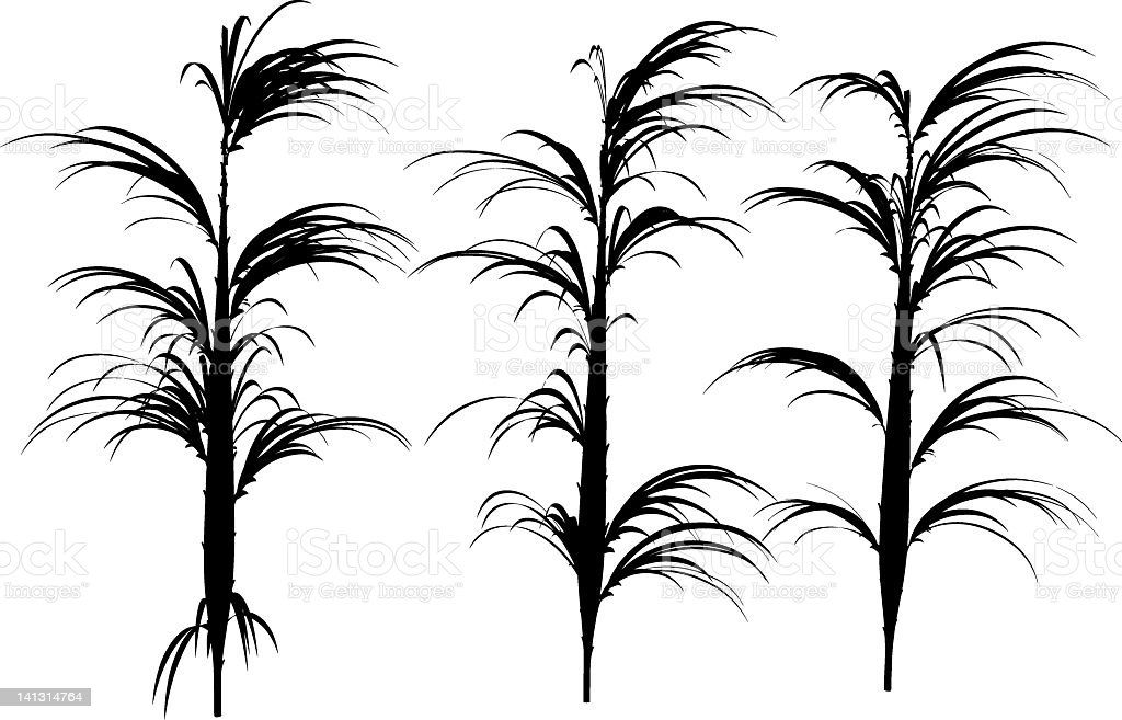 small palm silhouette royalty-free stock vector art