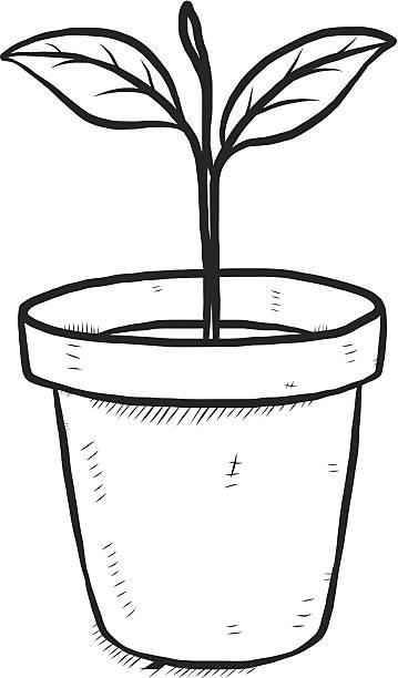 Flower Pot Potted Plant Plant Growth Clip Art Vector Images