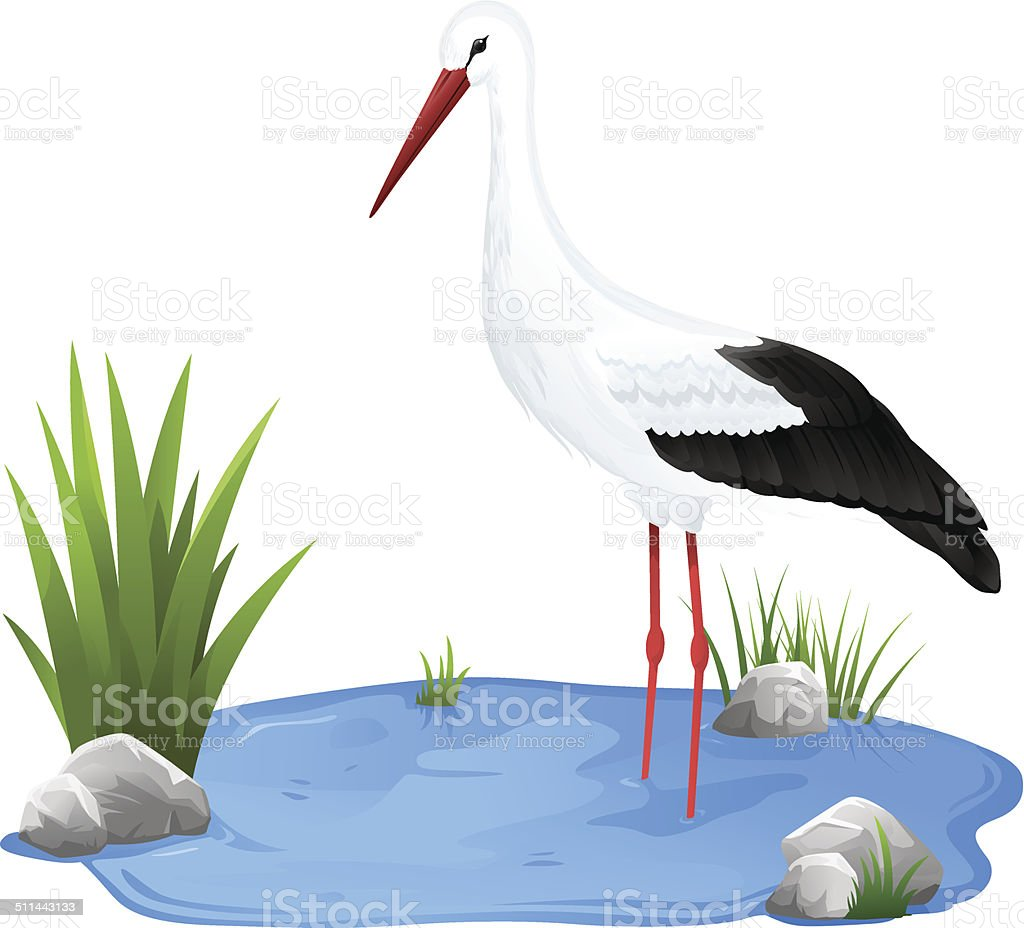Small pond with white stork vector art illustration