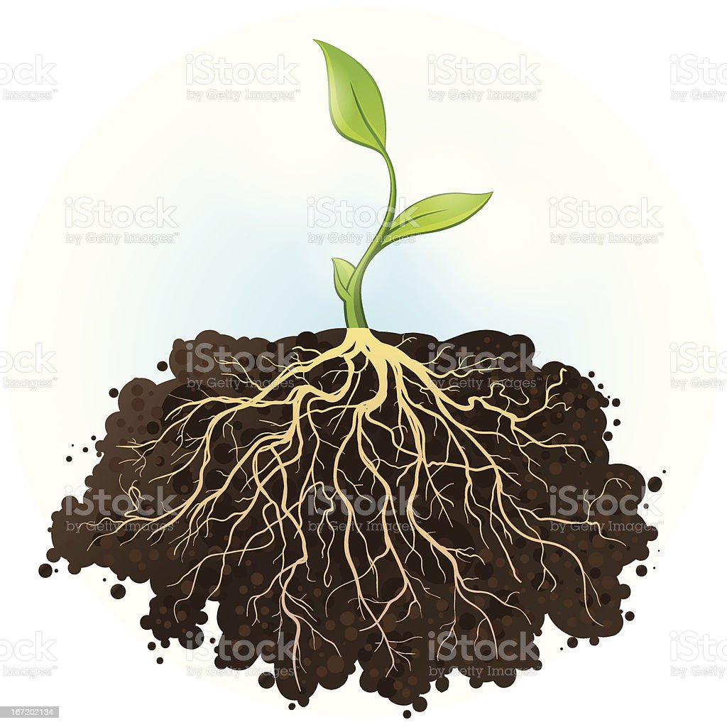 A small sapling with a strong foundation for large roots vector art illustration