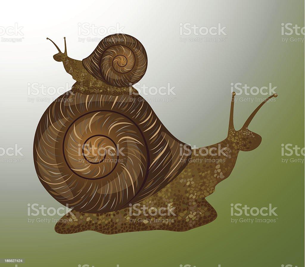 Snails vector art illustration