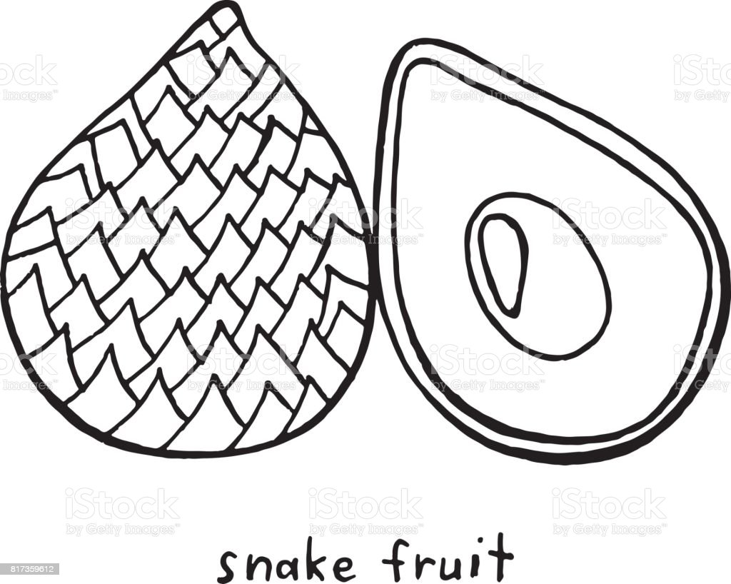 snake fruit coloring page graphic vector black and white art for