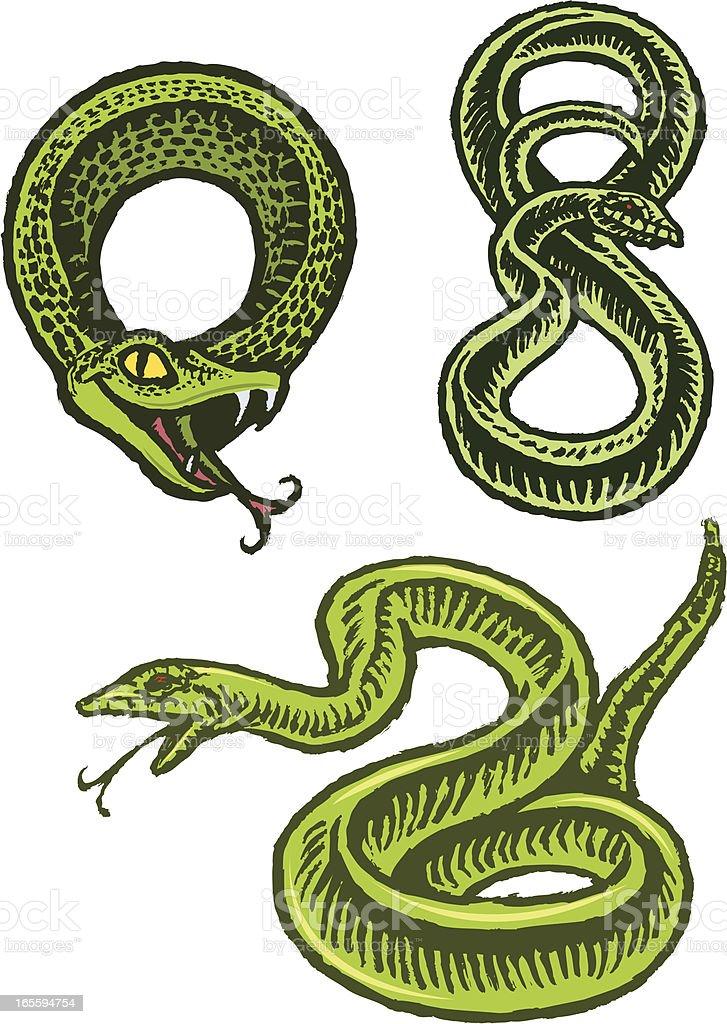 Snakes, Reptiles vector art illustration