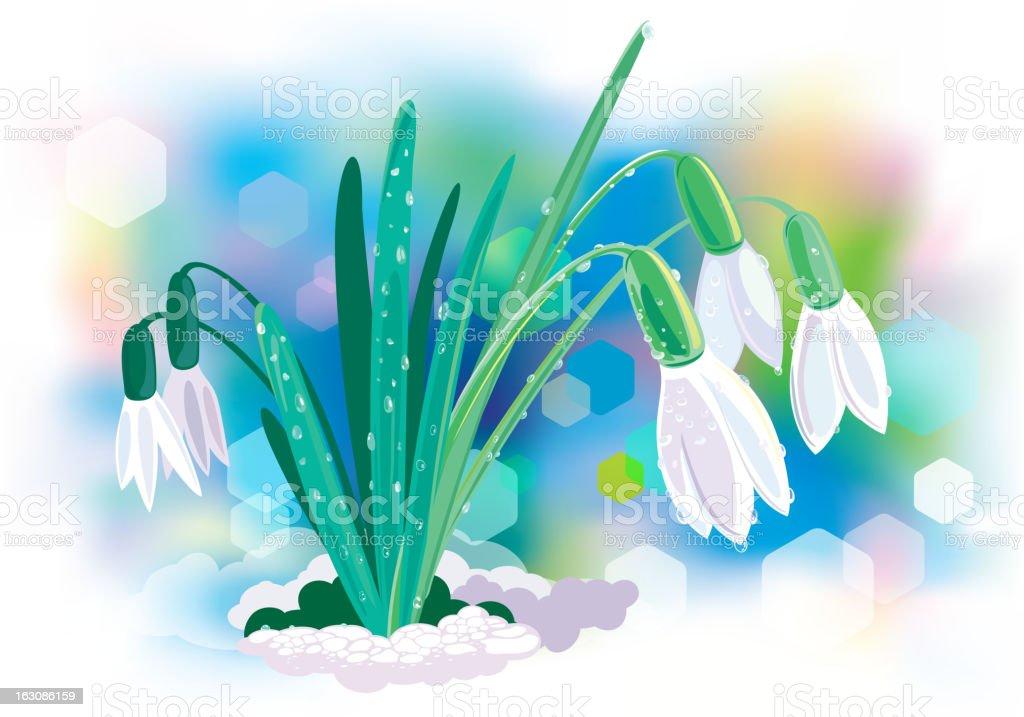 snowdrop royalty-free stock vector art