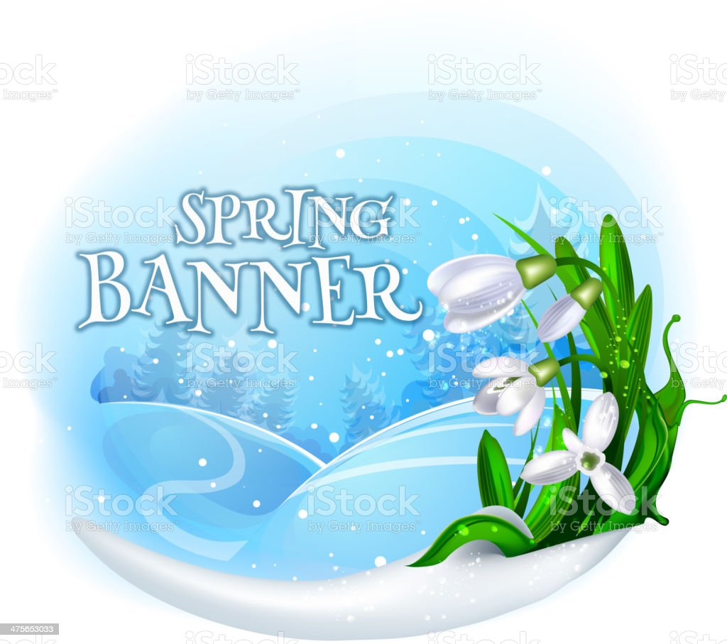 Snowdrops spring banner vector art illustration
