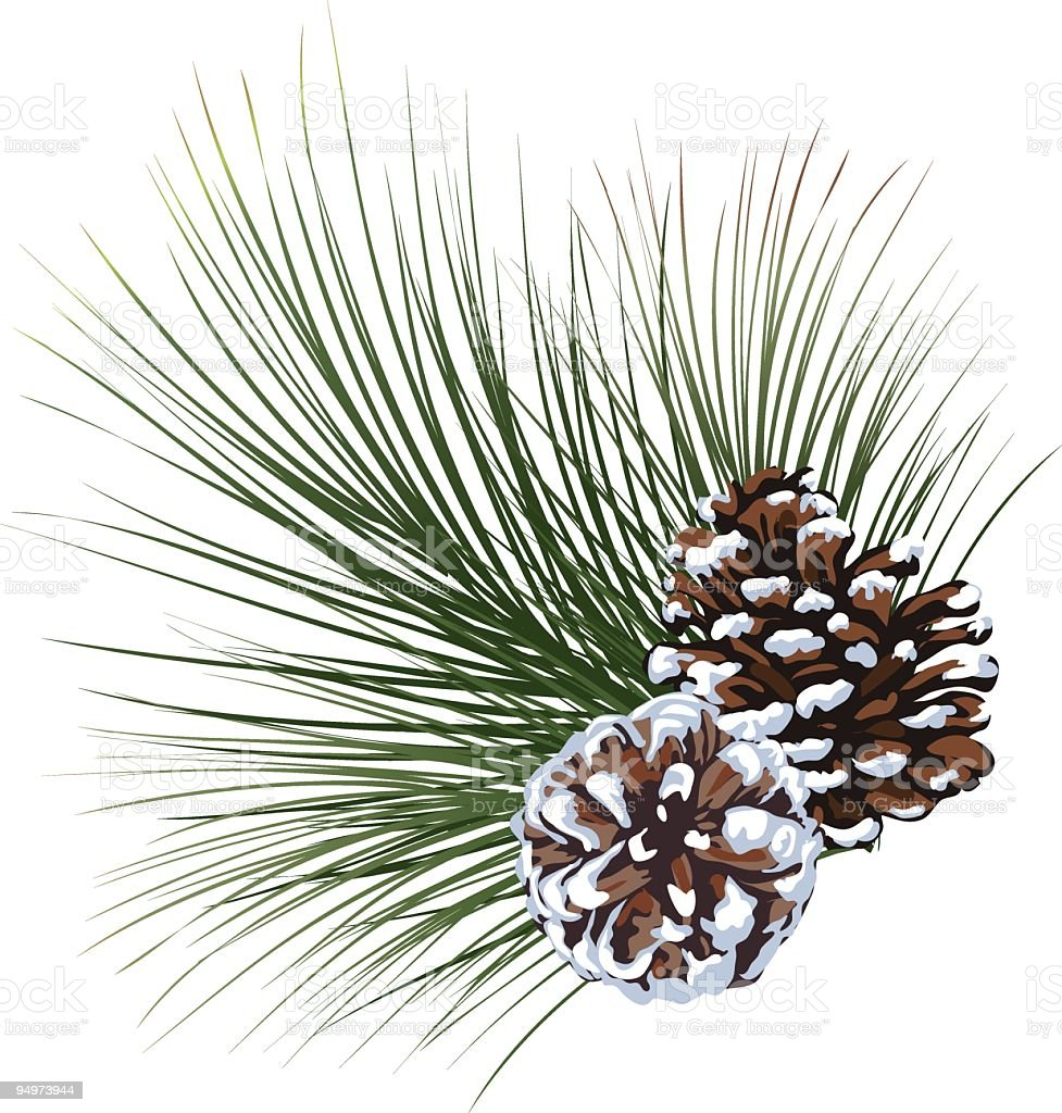Snowy Pine Evergreen Sprig with Pinecones isolated on White vector art illustration