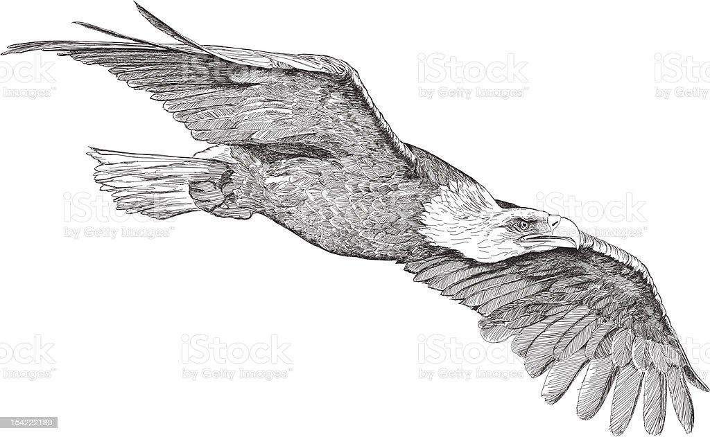 soaring eagle vector art illustration