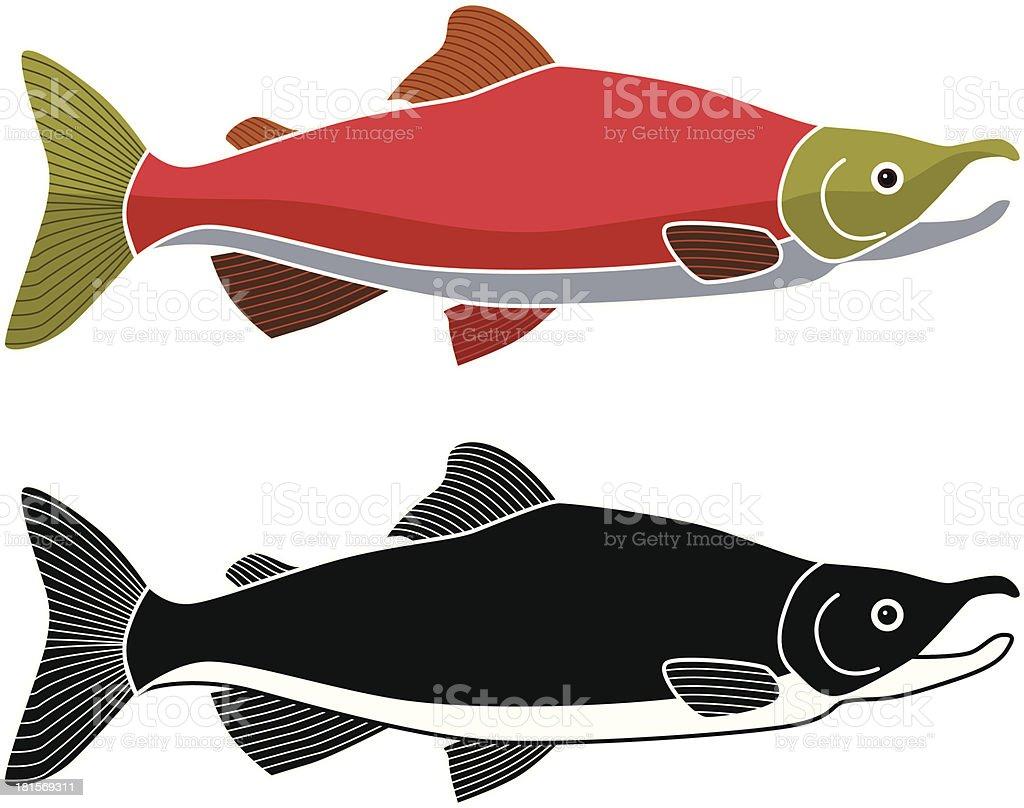 sockeye salmon royalty-free stock vector art