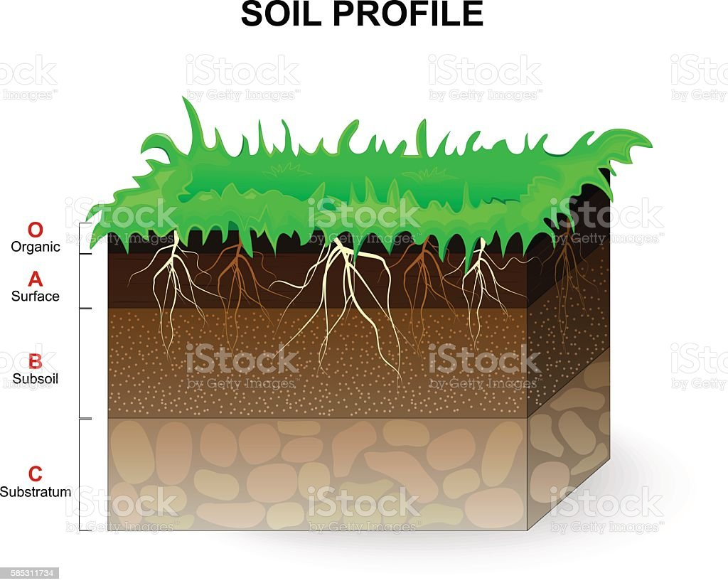 Soil Profile vector art illustration