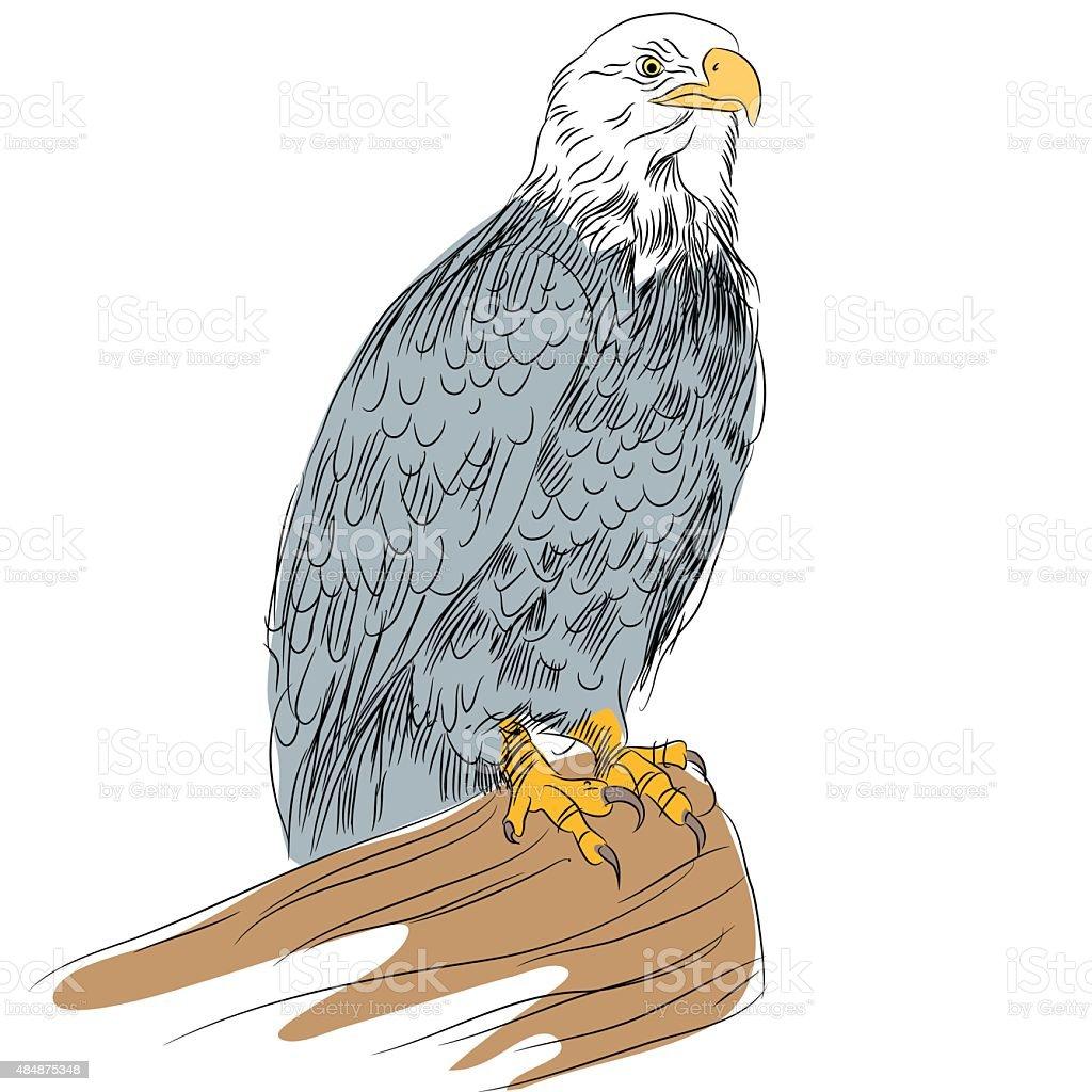 Bald Eage Sketch vector art illustration