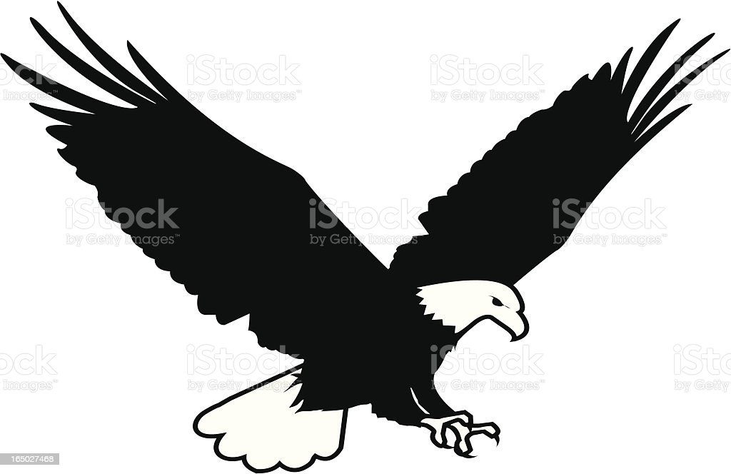 Bald Eagle Ilustration royalty-free stock vector art