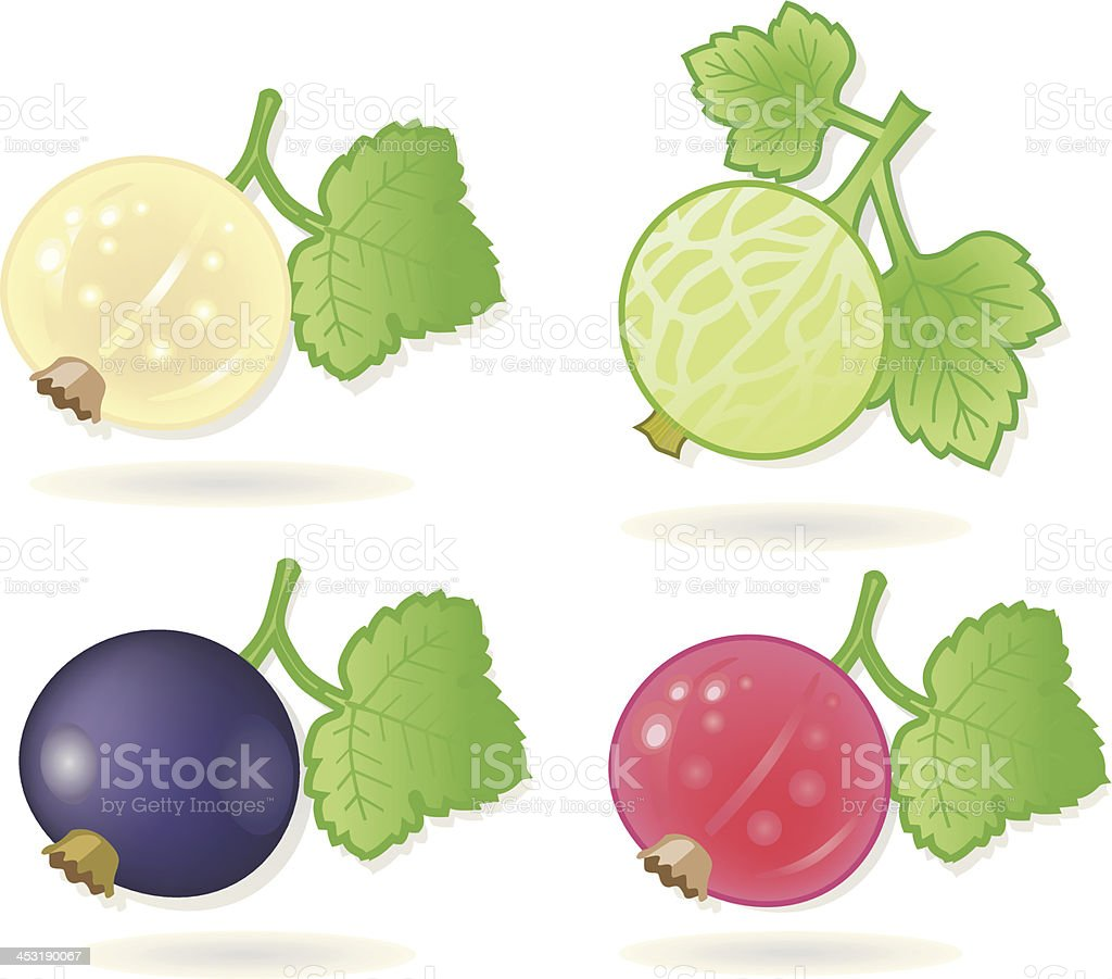sorted fruits (currants and goosberry). vector art illustration