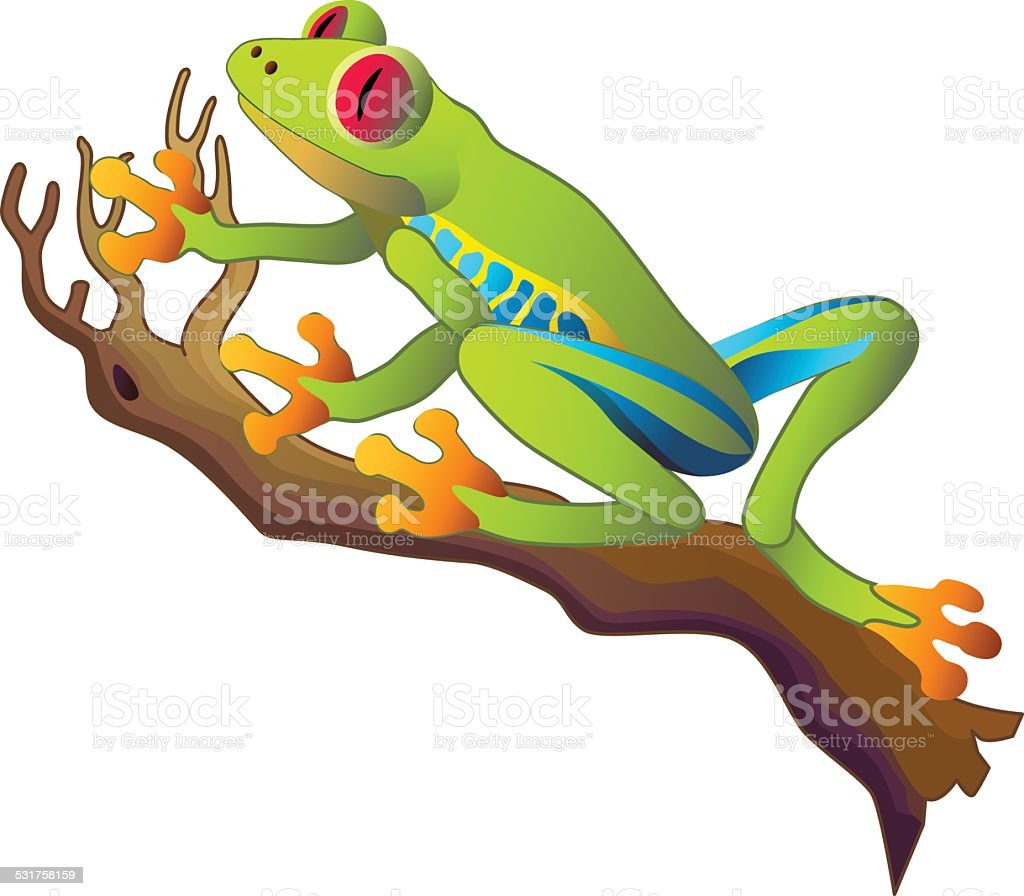 South American rainforest red-eyed tree frog sitting on a branch vector art illustration