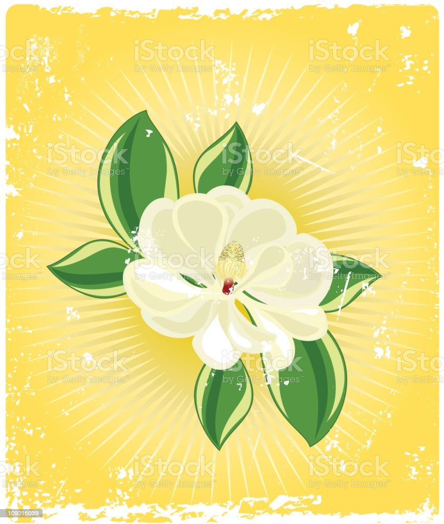 southern magnolia with grunge vector art illustration