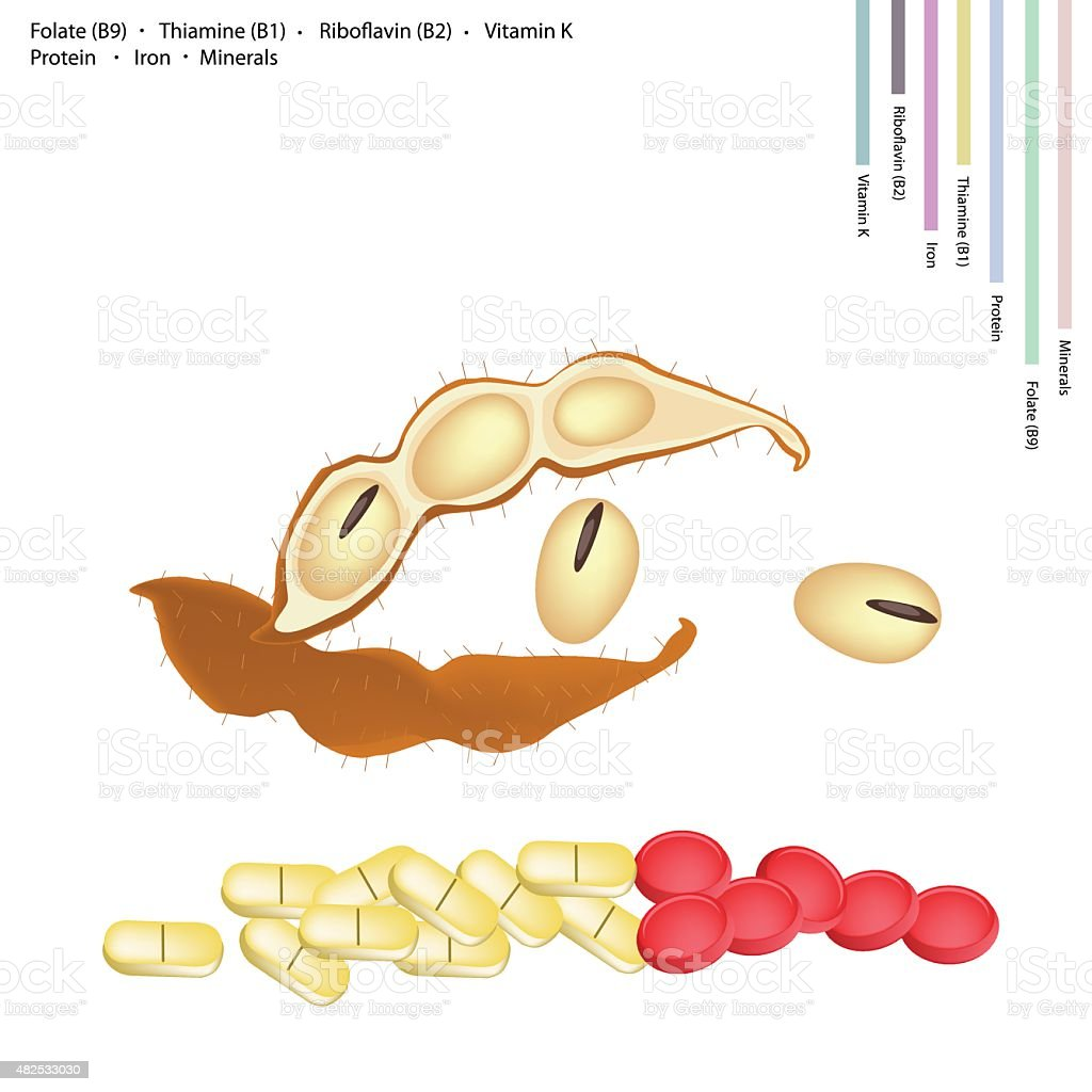Soybean with Vitamin B9, B1, B2 and K vector art illustration