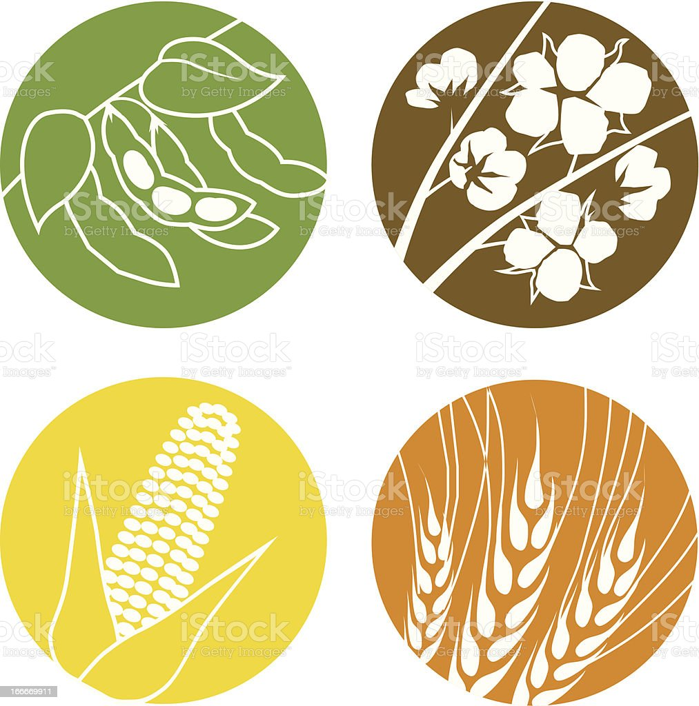 Soybeans, Cotton, Corn and Wheat vector art illustration