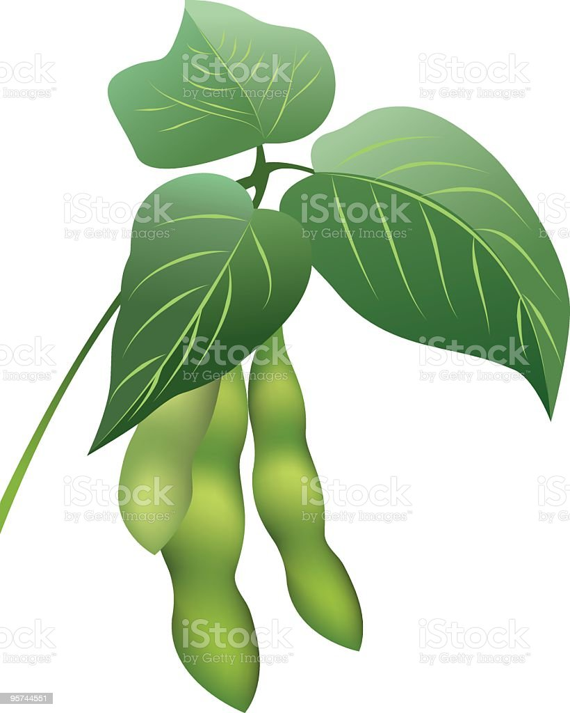 Soybeans Sprig With Bean Pods And Three Leaves Clipart stock ...
