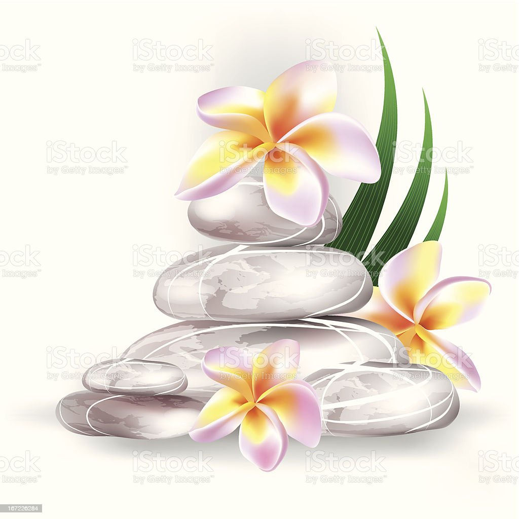 spa stones and frangipani flowers royalty-free stock vector art
