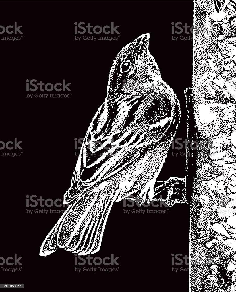 Sparrow Bird Feeder royalty-free stock vector art