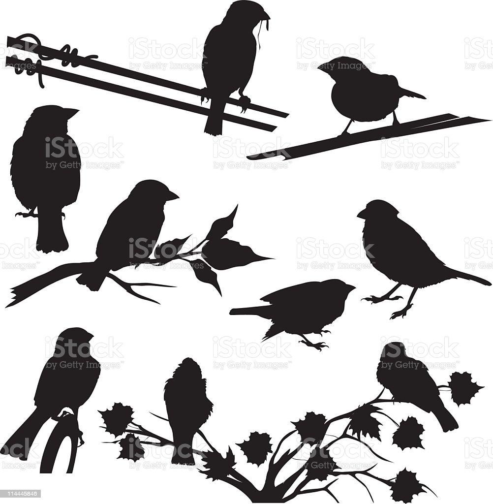 Sparrow Silhouettes vector art illustration