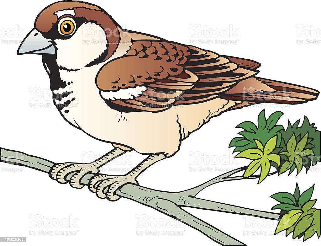 Sparrow royalty-free stock vector art