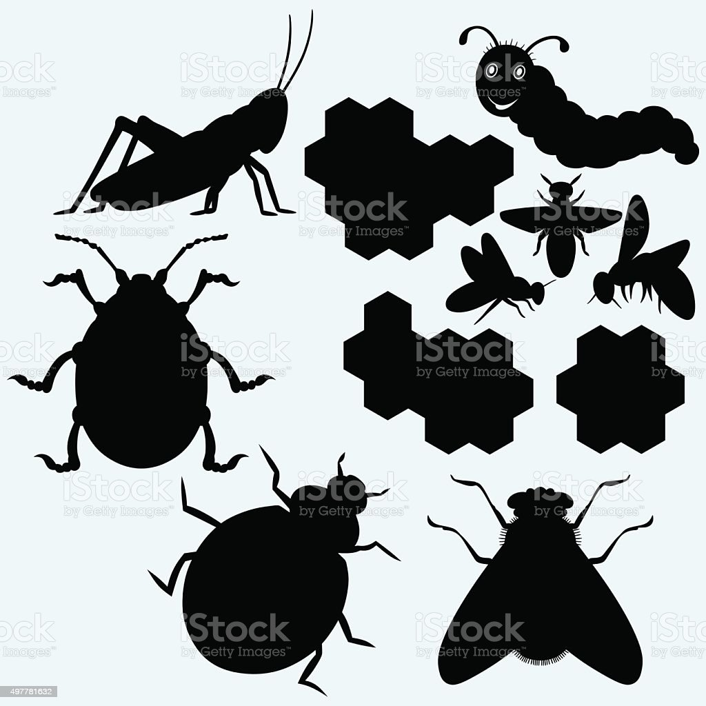 Species of insects vector art illustration