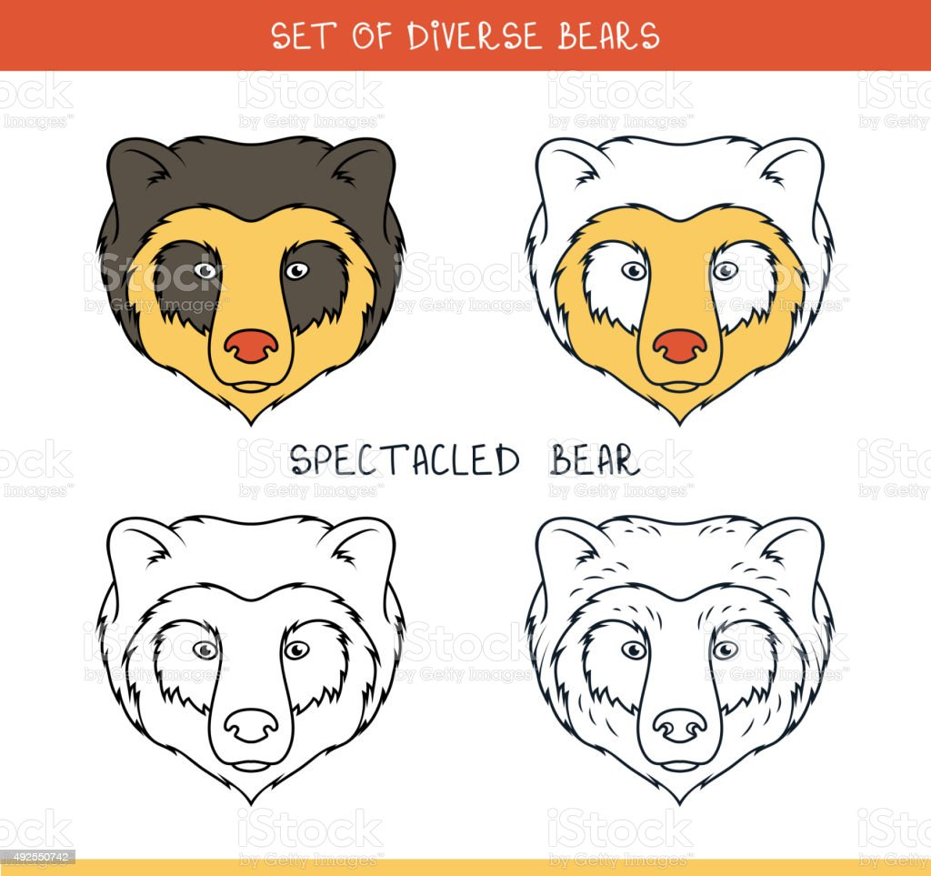 Spectacled bear. Set isolated face, heads bear in lines vector art illustration